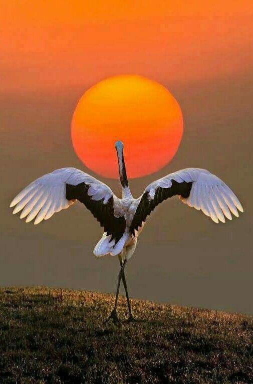 Good Evening Amitabh Pet Birds Birds Animals
