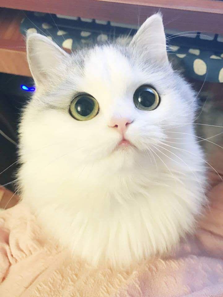 Pin de MJ en Te little ones | Pinterest | Gato, Animales y Gatitos ...