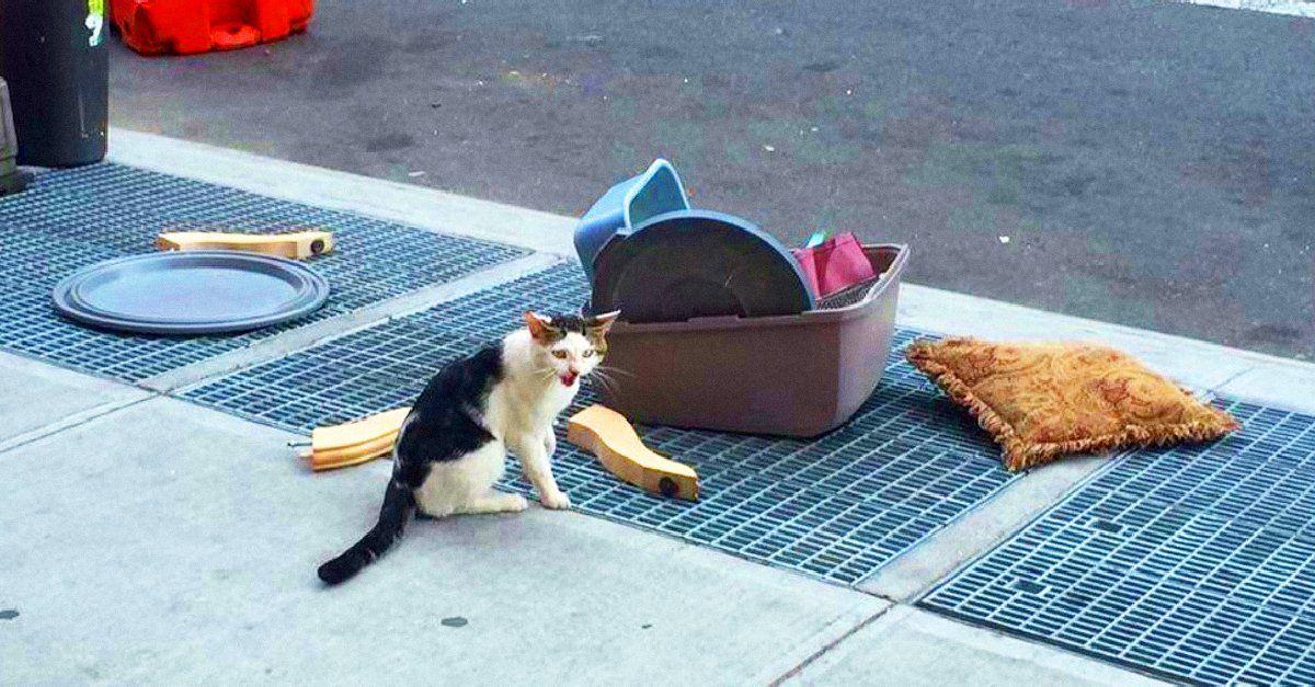 El llanto de este gatito abandonado con todo y sus pertenencias en medio de la calle es el reflejo de la maldad humana