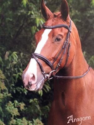 goed karakter | ... - Paarden te koop - 9 jarige sympathieke ruin met goed karakter