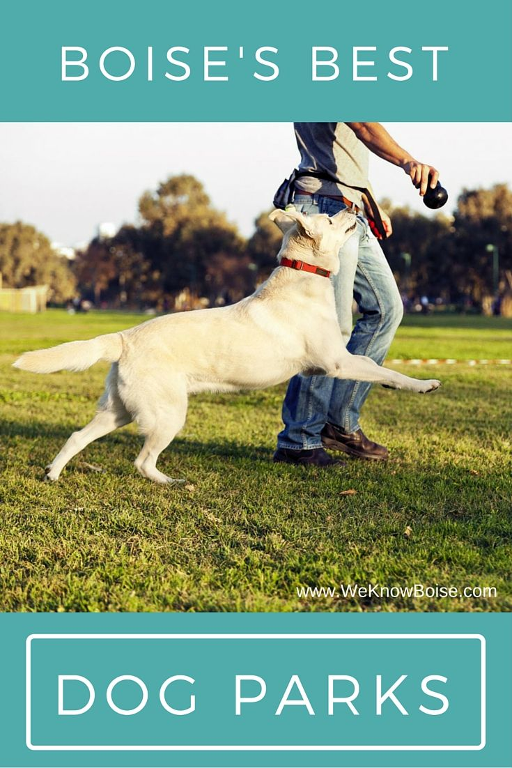 10 Best Boise Dog Parks We Know Boise Dog Park Boise Dogs