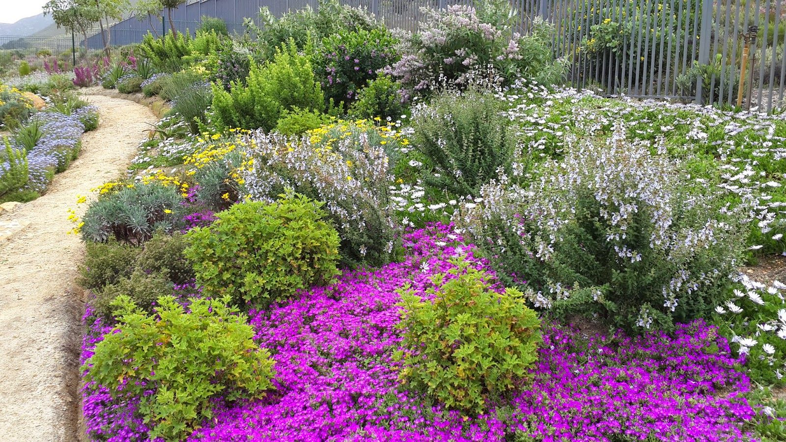Fynbos Gardens Hermanus: Spring 2014 | Small garden ...