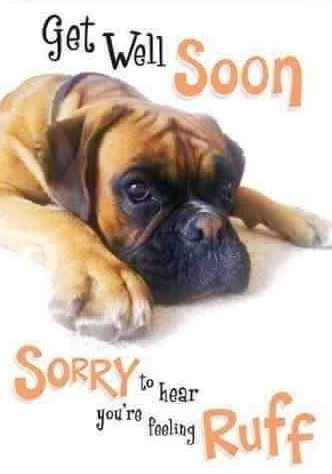 Kendra S Ruff Boxers Get Well Soon Get Well Quotes Feel Better