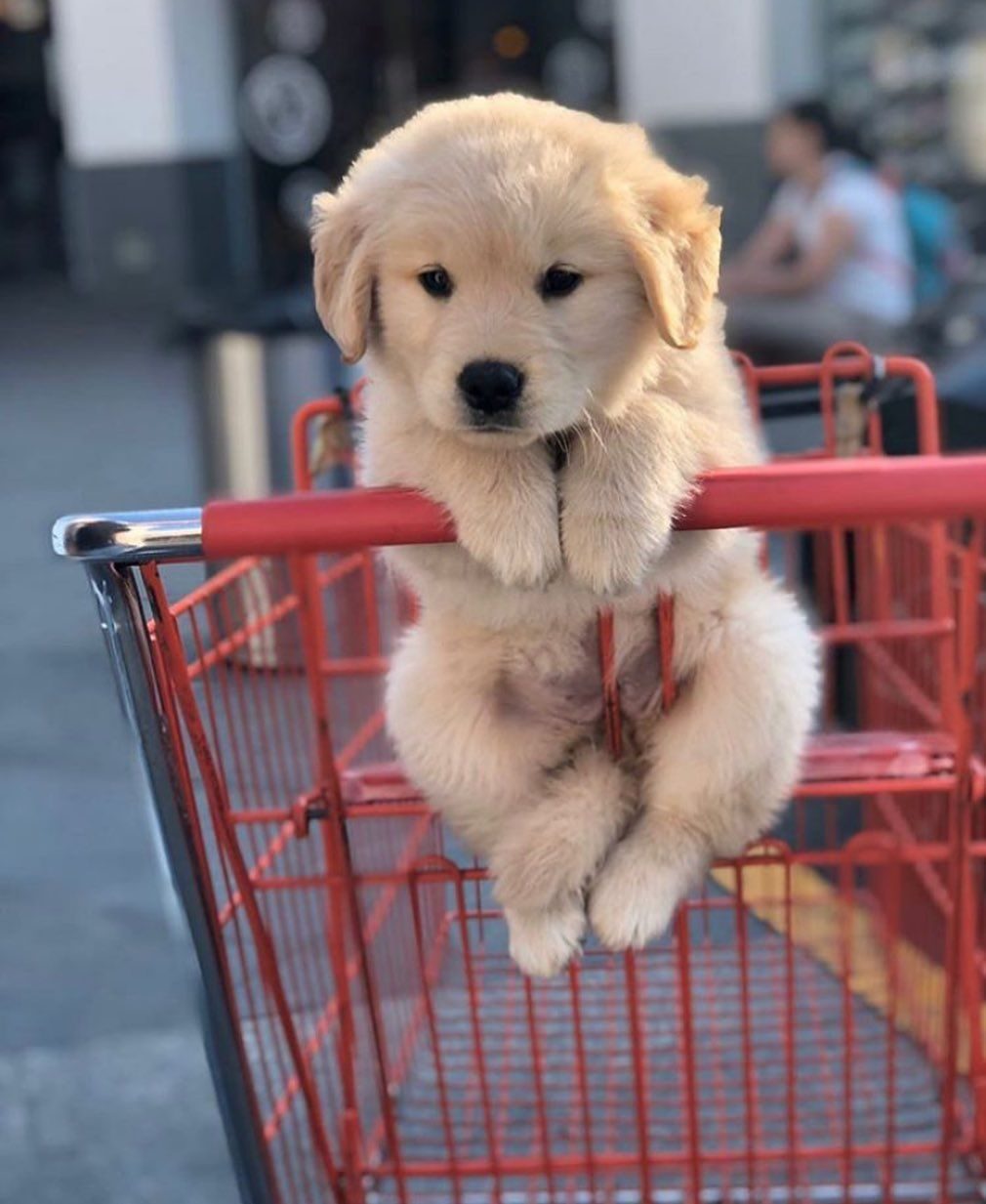 Dog Idea Dog Homes Dog And Baby Dog Projects Dog Cat Dog Ate Dog Home Ideas Home Dog Dog An In 2020 Cute Dogs And Puppies Cute Dog Photos Baby Animals Pictures