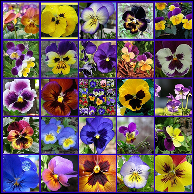 A Southern Daydreamer 2 4 Outdoor Wednesday Pansies Flowers Pansies Most Beautiful Flowers