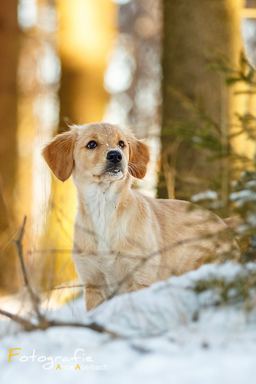 Photo Little Dog In The Snow By Anna Auerbach Hundefotografie Hunde