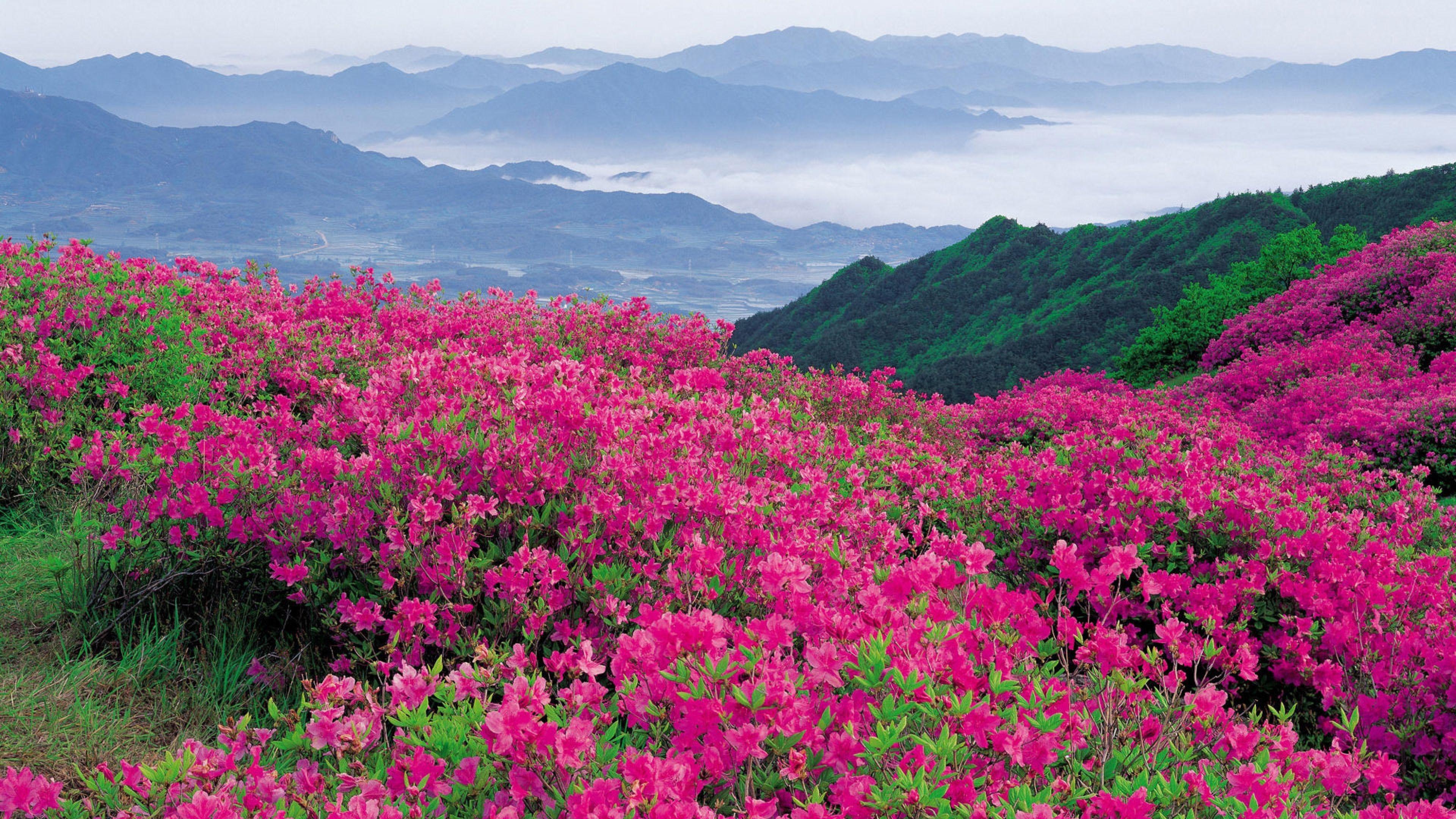 flowers 4K Ultra HD Wallpaper | ... Flowers, Mountains, Distance ...