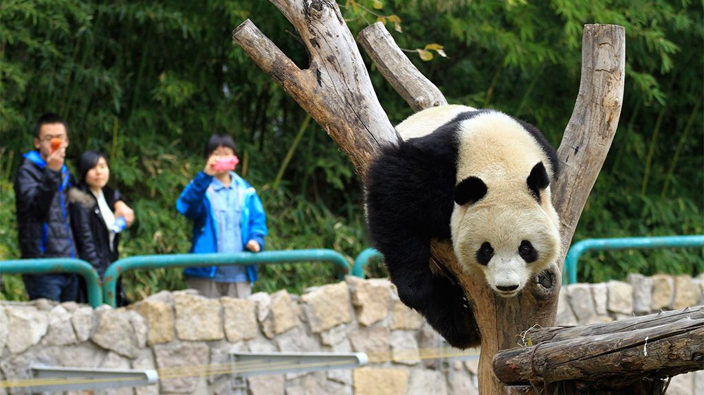 Worlds best zoos outdoors and adventure zoos rare animals and best zoos in the world that you must visit publicscrutiny Image collections