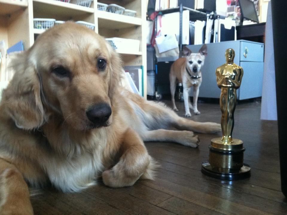 Golden Retriever Wins Academy Award for 'Best Foreign Language Short'
