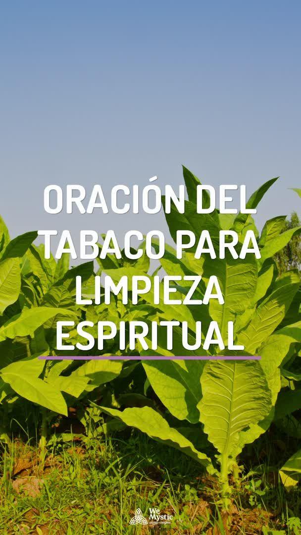 Oración Del Tabaco Para Limpieza Espiritual Wemystic Video Video Limpieza Espiritual Espiritualidad Oraciones