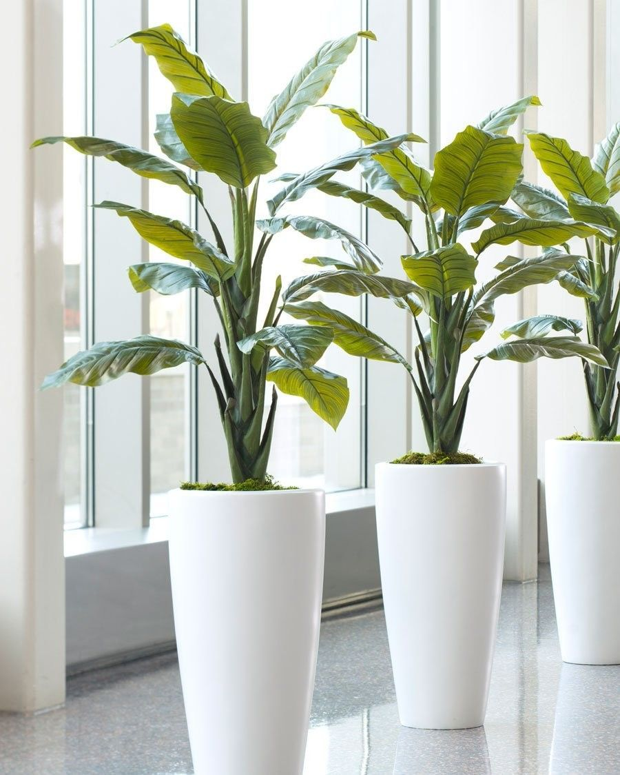 14 Unbelievable Cactus Plants Indoor Ideas Artificial Plants Floor Plants Artificial Plant Arrangements