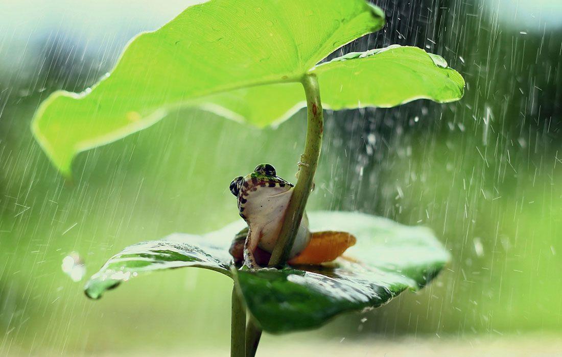 лето дождь картинки прикольные для ватсапа документ опубликован понедельник