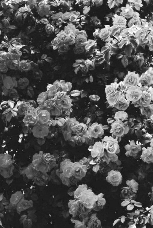 Black And White Flowers Wallpaper In 2019 Flowers Pretty