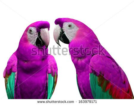gallery for purple macaws animals pinterest bird and animal