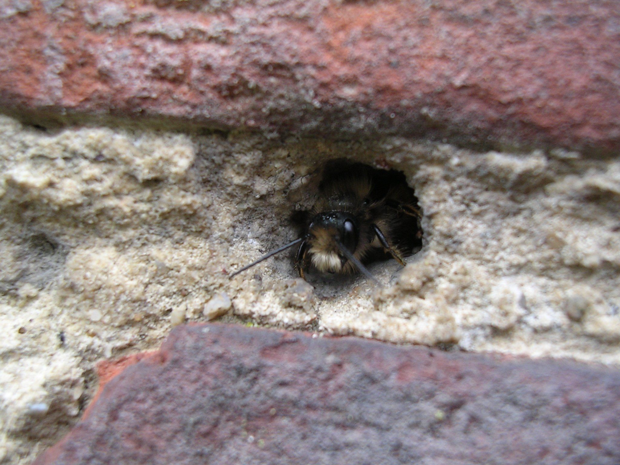 fc5deaabde3dd1e6fb065bbb4b9c0121 - How To Get Rid Of Wasps In A Stone Wall