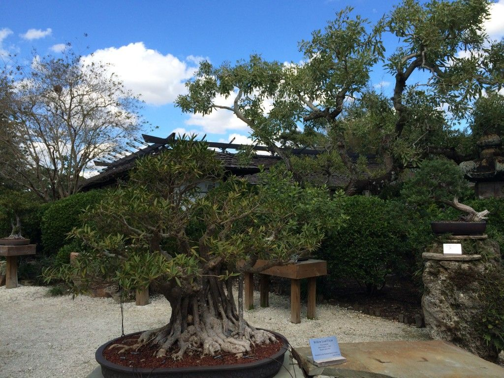 Delray Beach Florida Morikami Museum And Japanese Gardens Lovely Places Pinterest Delray
