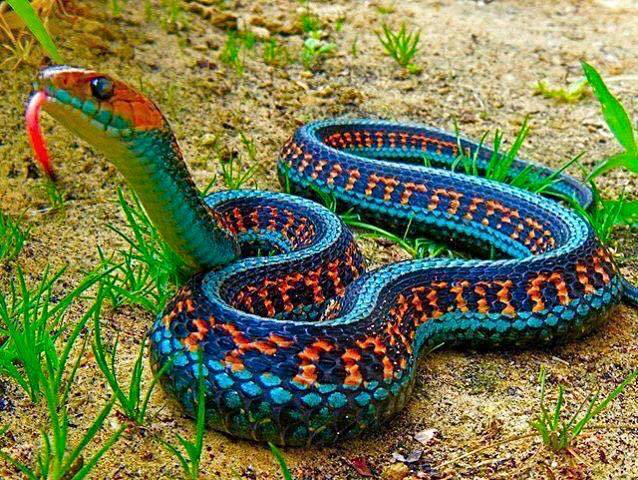 Pin by Becky libby on snakes | Colorful snakes, Beautiful snakes