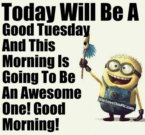 50 Cute Happy Tuesday Cartoon Quotes Good Morning Tuesday