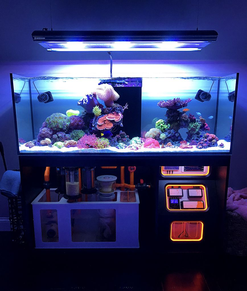 Fish tank vs aquarium - Saltwater Aquarium Find Incredible Deals On Saltwater Aquarium And Saltwater Aquarium Accessories Let Us Show You How To Save Money On Saltwater Aquarium