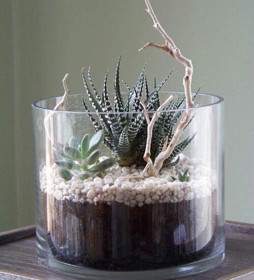 pin von gabriele niederwimmer auf pflanzenk bel garten anpflanzen garten und pflanzen. Black Bedroom Furniture Sets. Home Design Ideas