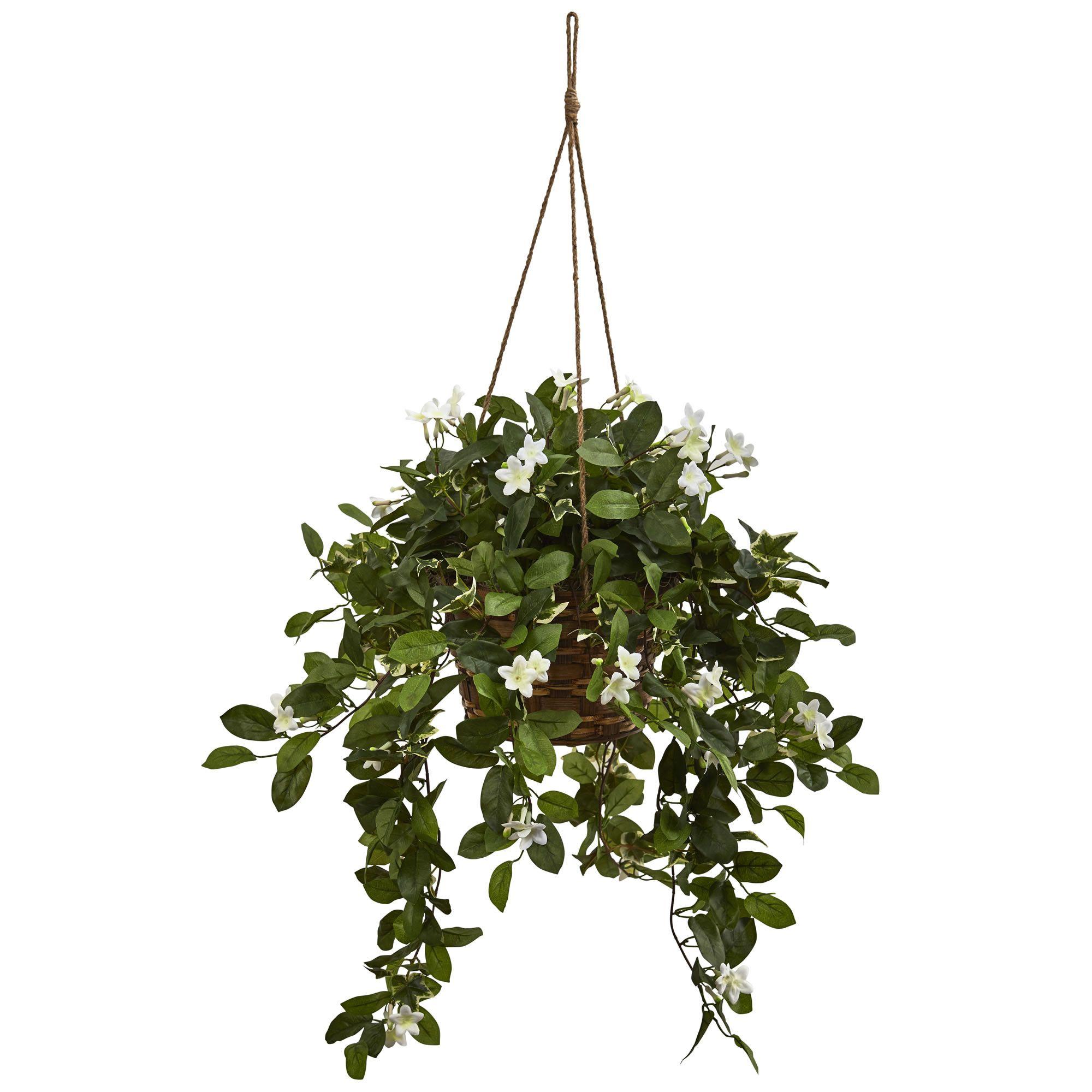 Mixed Stephanotis Hanging Plant in Basket