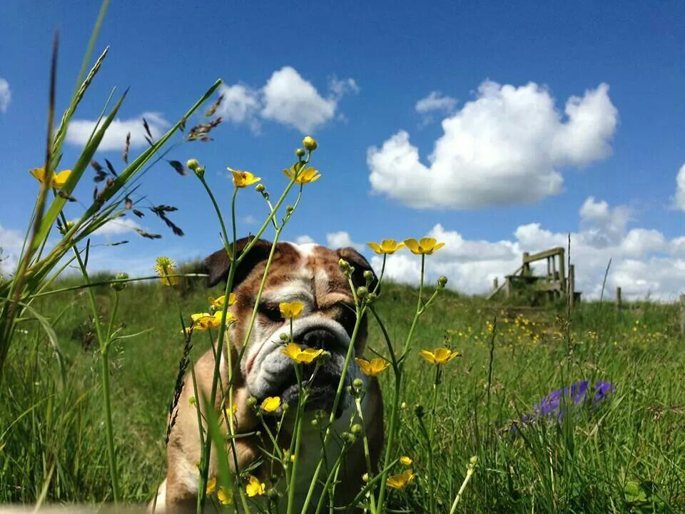 Ohhh. I love to smell the flowers