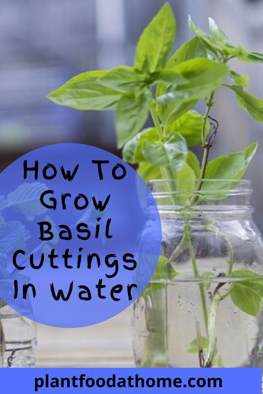Growing basil tips how to grow basil at home in 2020