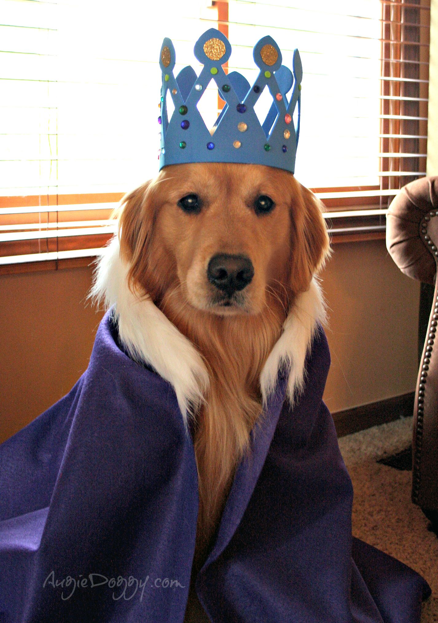 Golden Retriever Noble Loyal Companions Big Dog Halloween
