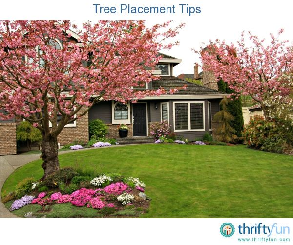 Where Trees Are Planted In Your Yard Can Make A Difference How It Looks Shade Issues And The Ease Of Maintenance