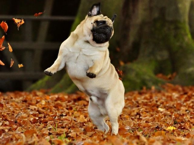 25 Animals Who Couldn't Be More Excited About The Fall ...