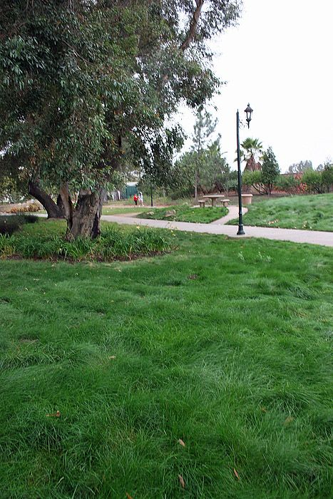 We Had Created The Dream Lawn Imagine A Lawn That Once Established Requires Little Or No Irrigation Fertilization Or Aeration And Grows So Grass Seed Lawn Garden Lawn