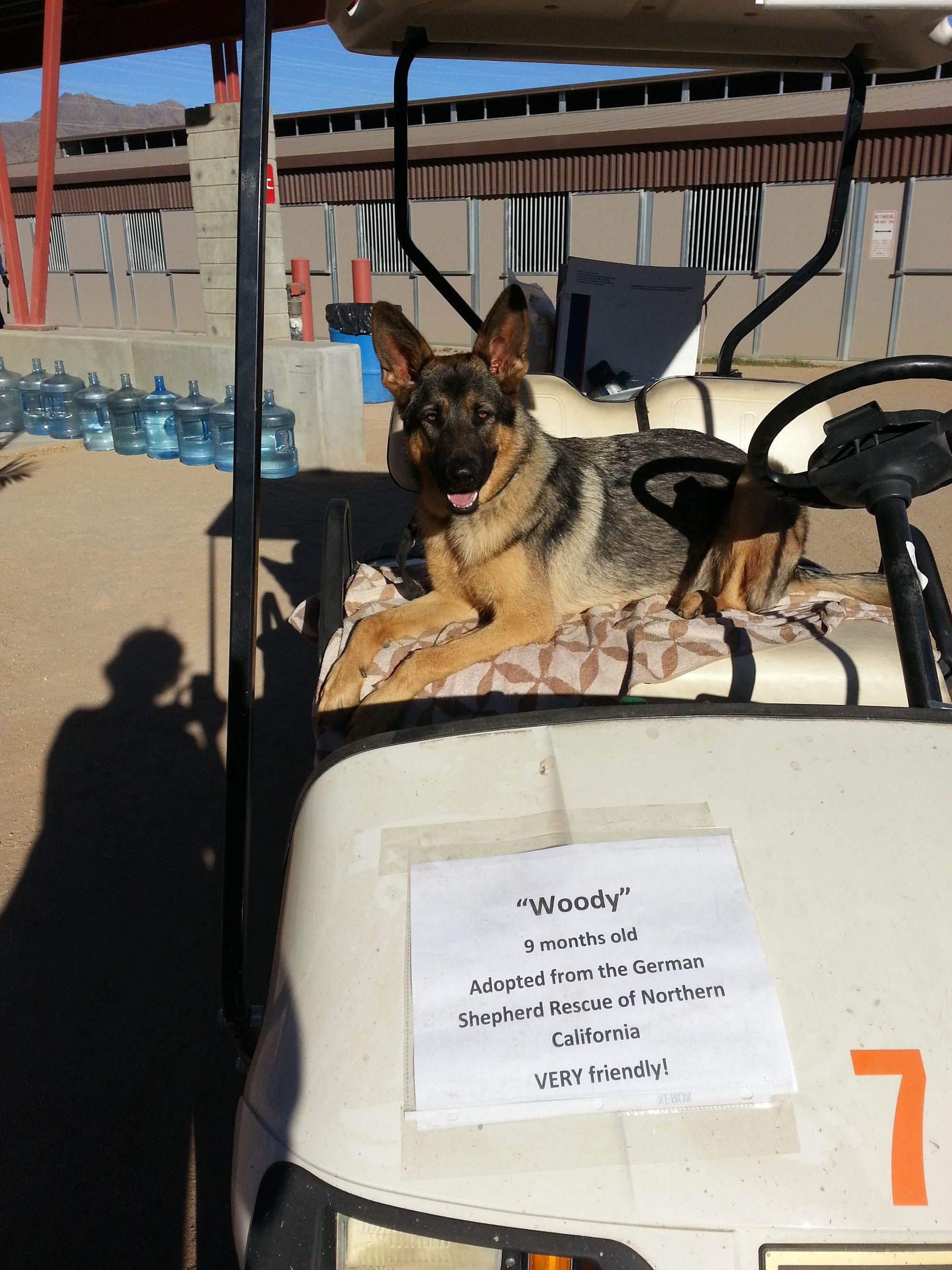 Woody Is Really Into His New Role Of Chief K9 Greeter At Horse