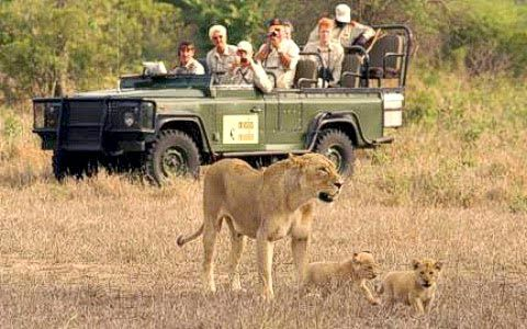 Are You Significant To Add #KenyaSafariHolidays In Your Itinerary List? Then check out more @ http://kenya-safaris.co/on-safari/