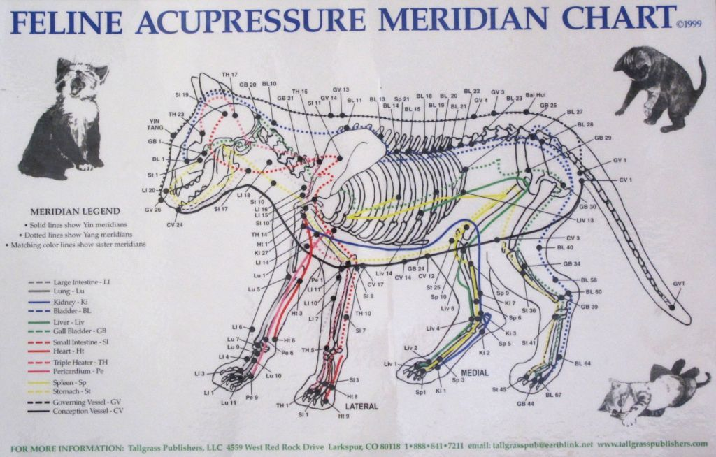Cat Acupuncture | Cats Exclusive | Behind the Scenes | Pinterest