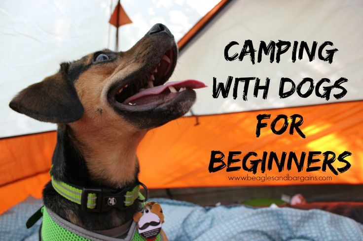 Camping with Dogs for Beginners | Camping for beginners ...