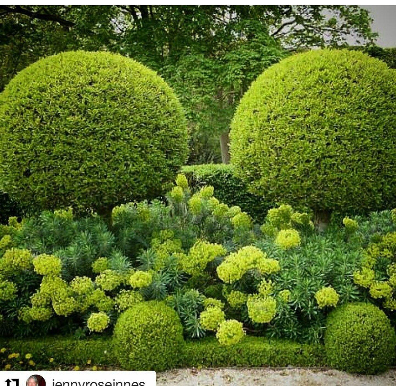 Round hedging Topiaire, Jardins