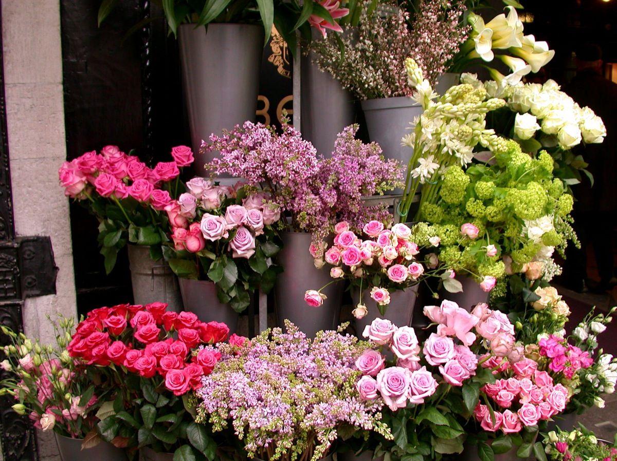 Flower Shop 1 Flickr Photo Sharing Escogidos Pinterest