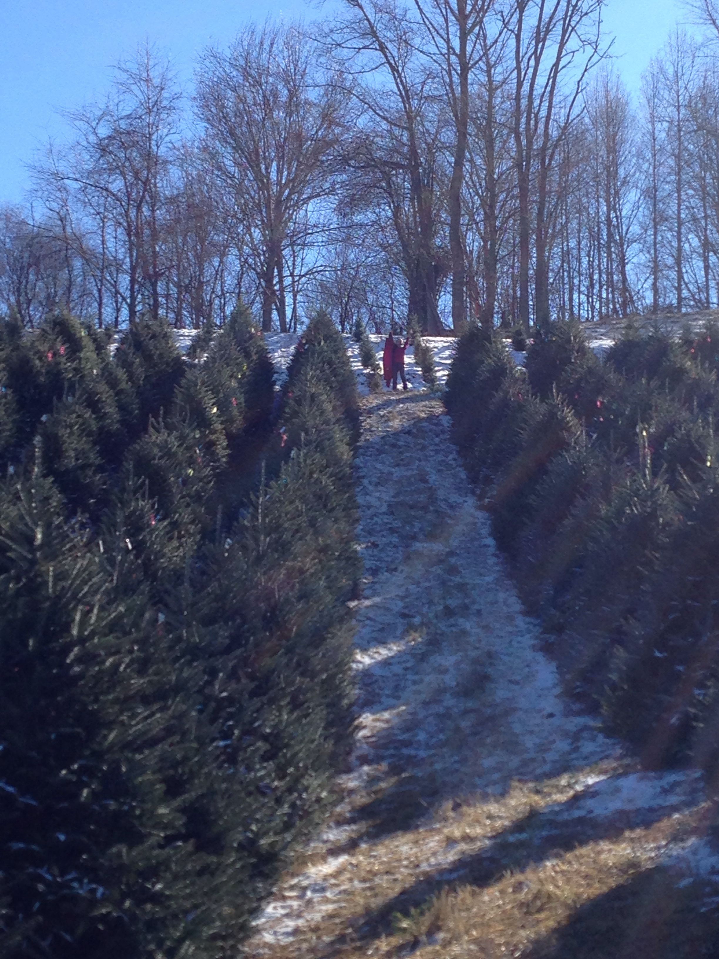 Boyd S Mountain Tree Farm Waynesville Nc North Carolina Mountains Day Trip Nc Mountains