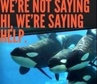 """SPEAK OUT!  TELL American Express:  STOP BEING COMPLICIT IN BRUTAL ANIMAL CRUELTY! American Express is one of SeaWorld's newest corporate partners. Earlier this year, they became the """"official card"""" of SeaWorld, and we need to tell them that orcas are intelligent animals who do not belong in tiny tanks at SeaWorld.  PLZ Sign and Share!"""