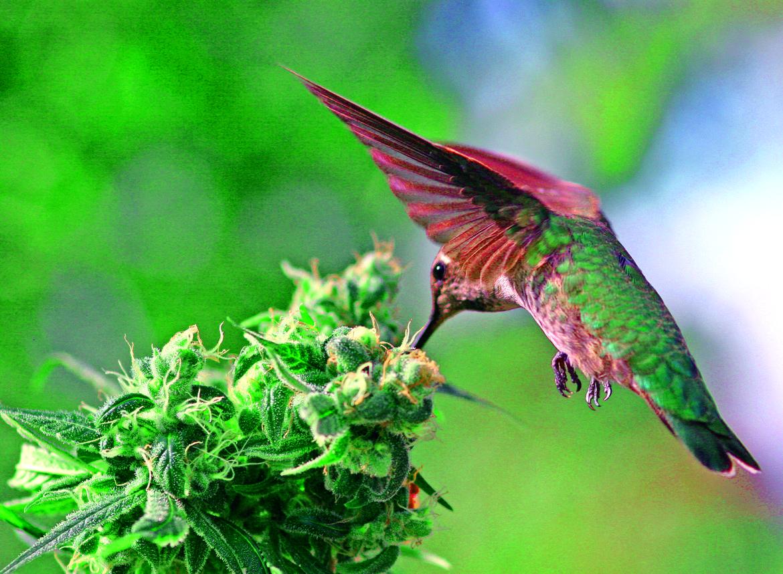 hummingbird by cameron drake on 500px u003c3 science u0026 nature