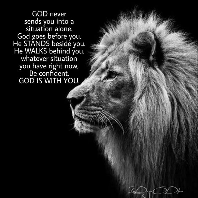 Pin By Reza Setiawan On Quotations Lion Quotes Motivational Quotes For Life Warrior Quotes