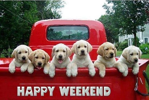 Happy Weekend! - Lab puppies in the back of a bright red pick up truck.