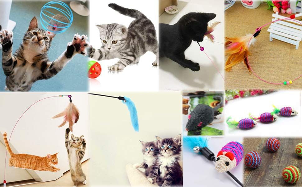 Cat Toys Legendog 10 Pcs Cat Kitten Interactive Mouse Toys Set For Indoor Kitty And Cats Amazon Co Uk Pet Supplies Cats And Kittens