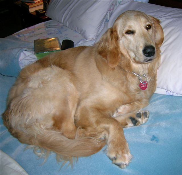 Guinevere in her queen size bed. She lets us sleep with her, a bit cozy at times.