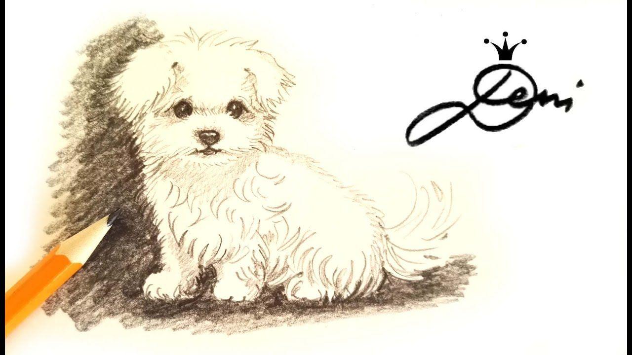wie manBild von Lotte Malteser hund, Hund
