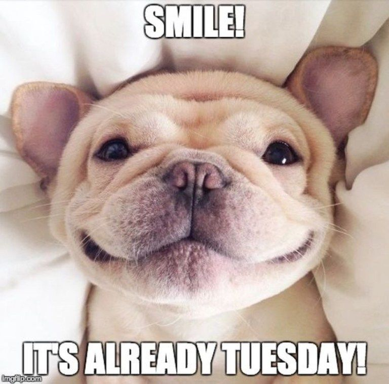 15 Happy Tuesday Memes - Best Funny Tuesday Memes | Happy tuesday meme, Happy tuesday quotes, Tuesday quotes