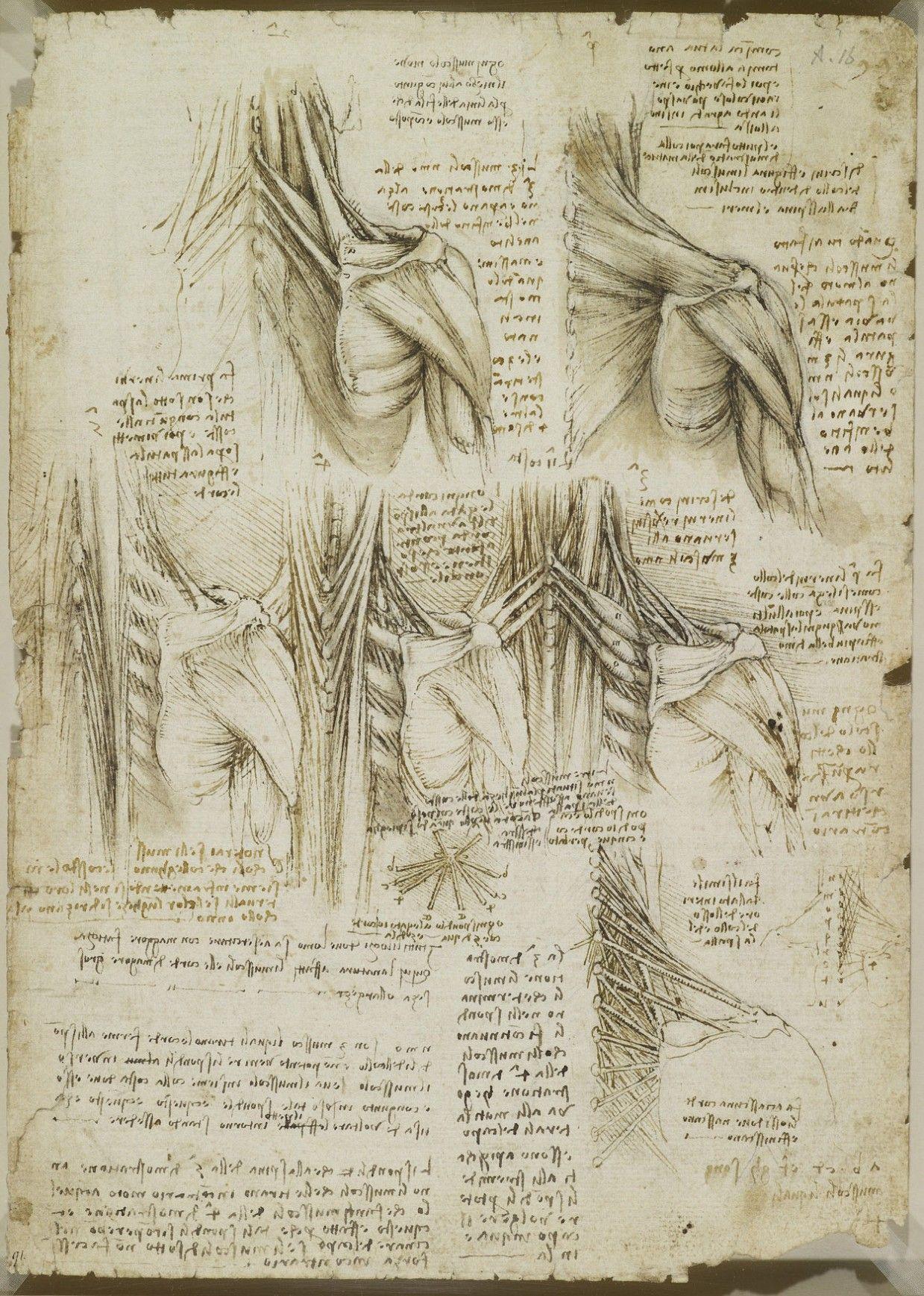 Анатомические рисунки Леонардо да Винчи выложили в открытый доступ