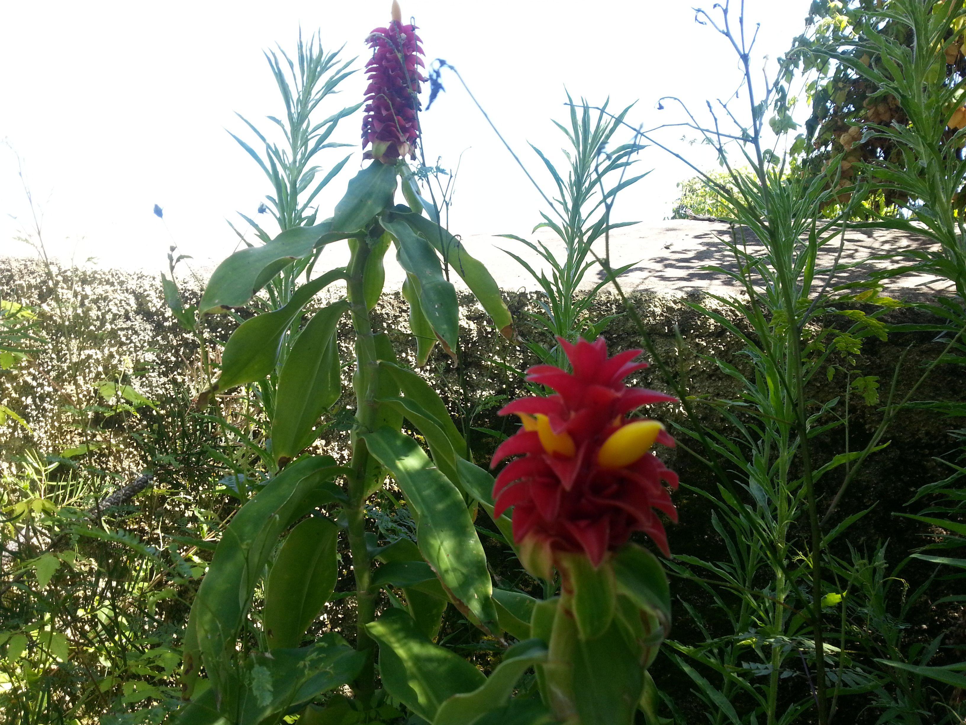 En el botánico de Madeira