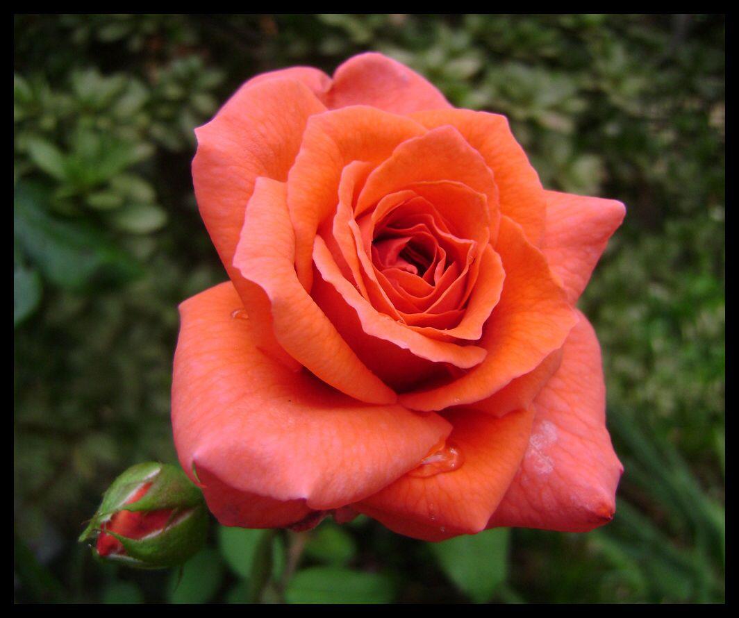 Quinta flower de esperança !!!