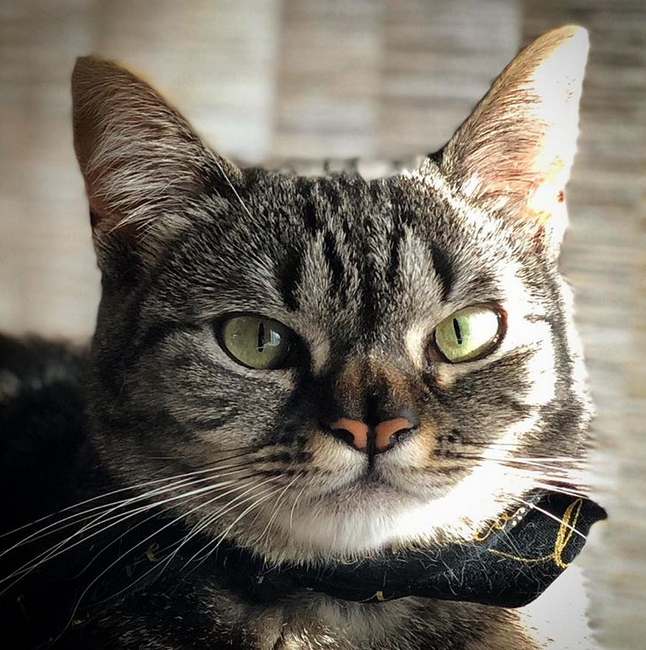 Meet The Adorable Wobbly Cat With A Cleft Nose Who Helped Unite